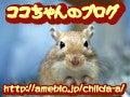 シマリスひまわり&くるみ日記-☆ココちゃんのペットと日常のブログ☆