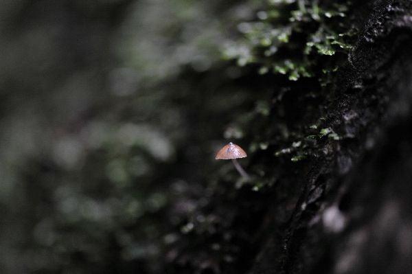 北海道の野生動植物写真-キノコ