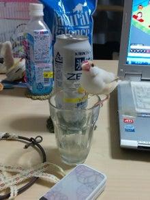 ちびログ!-kapuchi