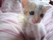 猫女の what a ☆にゃん☆derful world