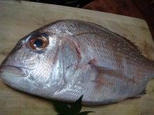 ウフフ★ブログ~中南米バックパッカーのその後~-鯛1