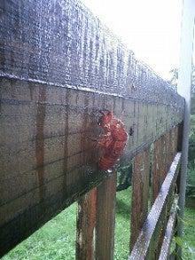 神泉で働く人事のブログ@ECナビ-せみの抜け殻