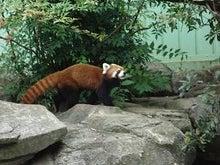 とろとろひとりごと-パンダ