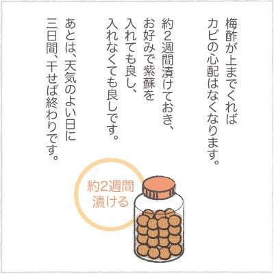 日々の泡・絵日記-うめ06