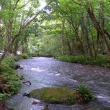 奥入瀬渓流の清らかな…