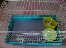 緑のチカラ-写真.jpg