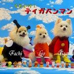 ☆Dress up Pome☆-lkg-b3