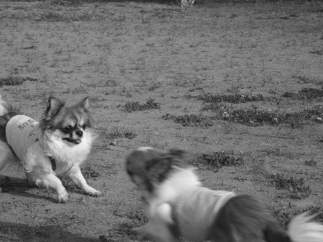 俺と犬と-0115
