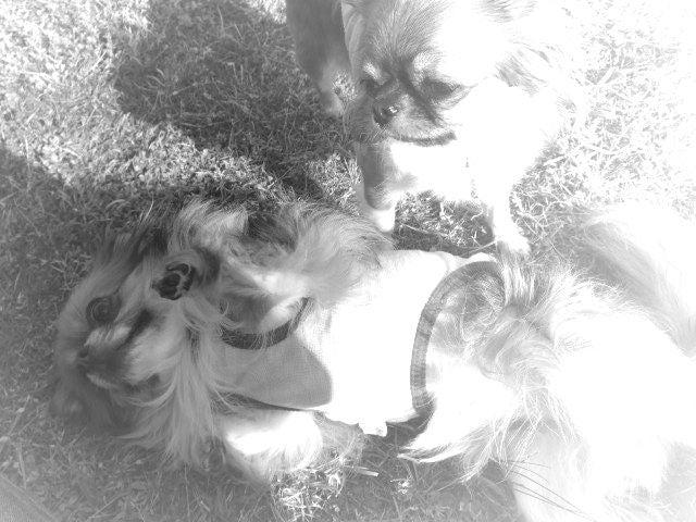 俺と犬と-0114