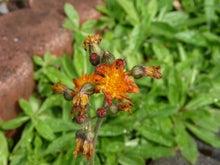 病気と気功 気功教室日之本元極 見えない力で不思議に元気-気功 癒しの花
