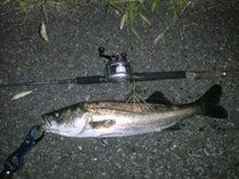 MACHALOG~FishingLife~-DSC00190.JPG