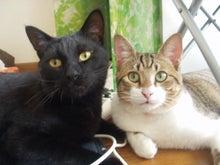 猫とカエル王子-kumakina