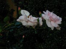 徒然アルバム-花を撮る