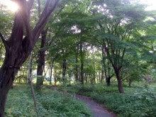 カルマンギアのある生活-東御苑-雑木林
