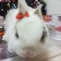 ミニウサギ☆ミ