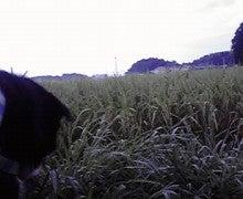 ☆蘭ラン日記☆ -2009082406200000.jpg