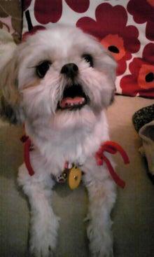飼育放棄犬シーズー春香が教えてくれた、幸せな気持ちになる方法-090822_1820~01.jpg