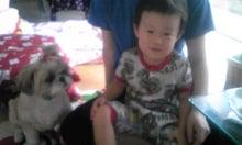 飼育放棄犬シーズー春香が教えてくれた、幸せな気持ちになる方法-090720_0846~010001.jpg