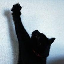 騙された黒猫。そして…