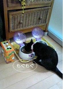 ☆黒猫ぴの☆~肉球足跡~