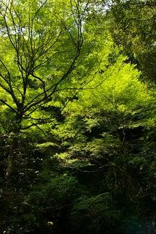 毎日はっぴぃ気分☆-緑の空