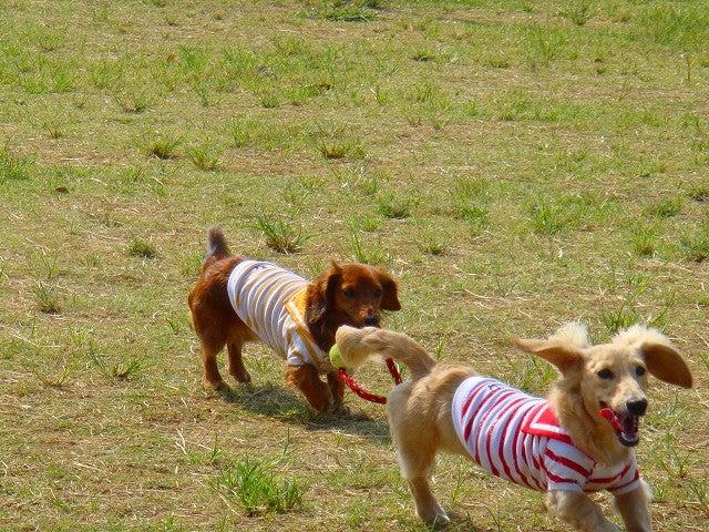旅犬Lanileaのほほん風船記-城南島海浜公園