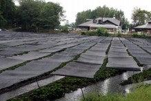 カルマンギアのある生活-大王わさび農場