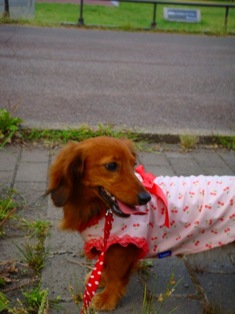旅犬Lanileaのほほん風船記-日比谷公園で