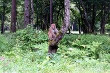 カルマンギアのある生活-道で出会った猿