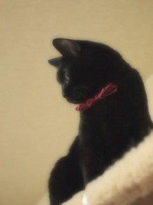スス♀+ぶー♂ログ ~黒猫とアメショMIX+その下僕~  border=