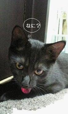 黒猫ぴの~肉球足跡~