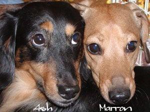 Marron&Ash