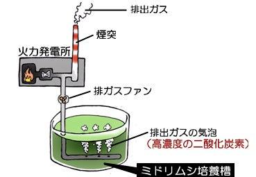 川崎悟司 オフィシャルブログ 古世界の住人 Powered by Ameba-火電の排出ガスでミドリムシ培養