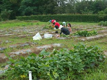 福島県在住ライターが綴る あんなこと こんなこと-市民農園