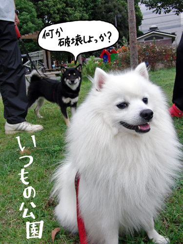 犬とモルと私達-1