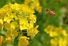 悠輔の地球(テラ)小屋-ミツバチ