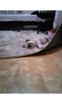 飼育放棄犬シーズー春香が教えてくれた、幸せな気持ちになる方法-SH3502180001.jpg