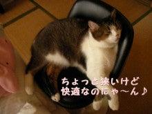 猫なんだもん。ニャー