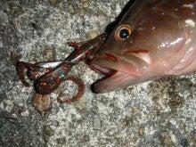Fishing Blog OFFSHORE CRAZY! ~ 夢は一発大物!   鮪だ!鰤だ!大政だ!巨カンパだ!大鯛だ!なんでもこ~い!-スカルピン