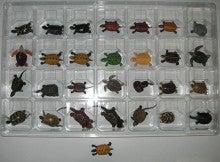 亀の子これくしょん-チョコエッグ コレクション