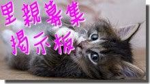 さんちゃんの猫ブログ