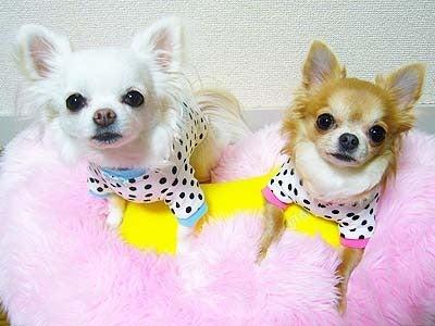 $* †Princesse Claris et Rose †*