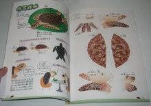 亀の子これくしょん-ウミガメ工作  種本  中