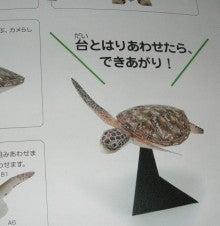 亀の子これくしょん-ウミガメ工作  種本  中 2