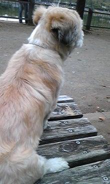 飼育放棄犬シーズー春香が教えてくれた、幸せな気持ちになる方法-090915_1511~03.jpg