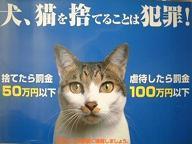 眠り猫-動物愛護法