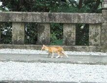 """山岡キャスバルの""""偽オフィシャルブログ""""「サイド4の侵攻」-竹林寺の子猫"""