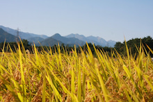 SATOSHI@長野の立ち寄り先-松川町_2009-09-20_2