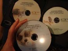 *★犬空★* 夏波夕日(Natsumi Yuka)-愛玩動物CD