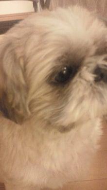 飼育放棄犬シーズー春香が教えてくれた、幸せな気持ちになる方法-200909172235002.jpg